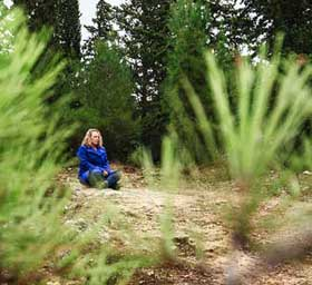 הודעות-עמית עמר יושבת ביער
